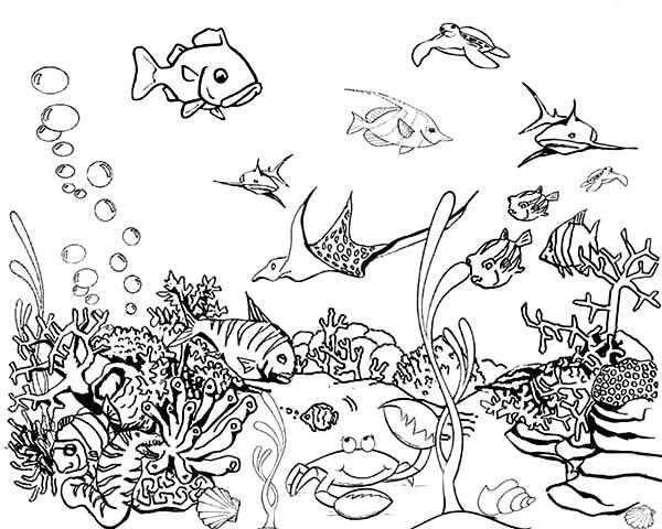 Tropical Fish Tank Coloring Page - NetArt