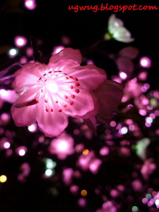 """Pink """"blossoms"""" at NZX"""