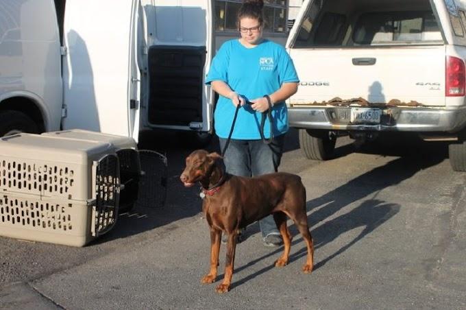 Se hará justicia con los perritos a los que mutilaron sus cuerdas vocales para que no ladraran