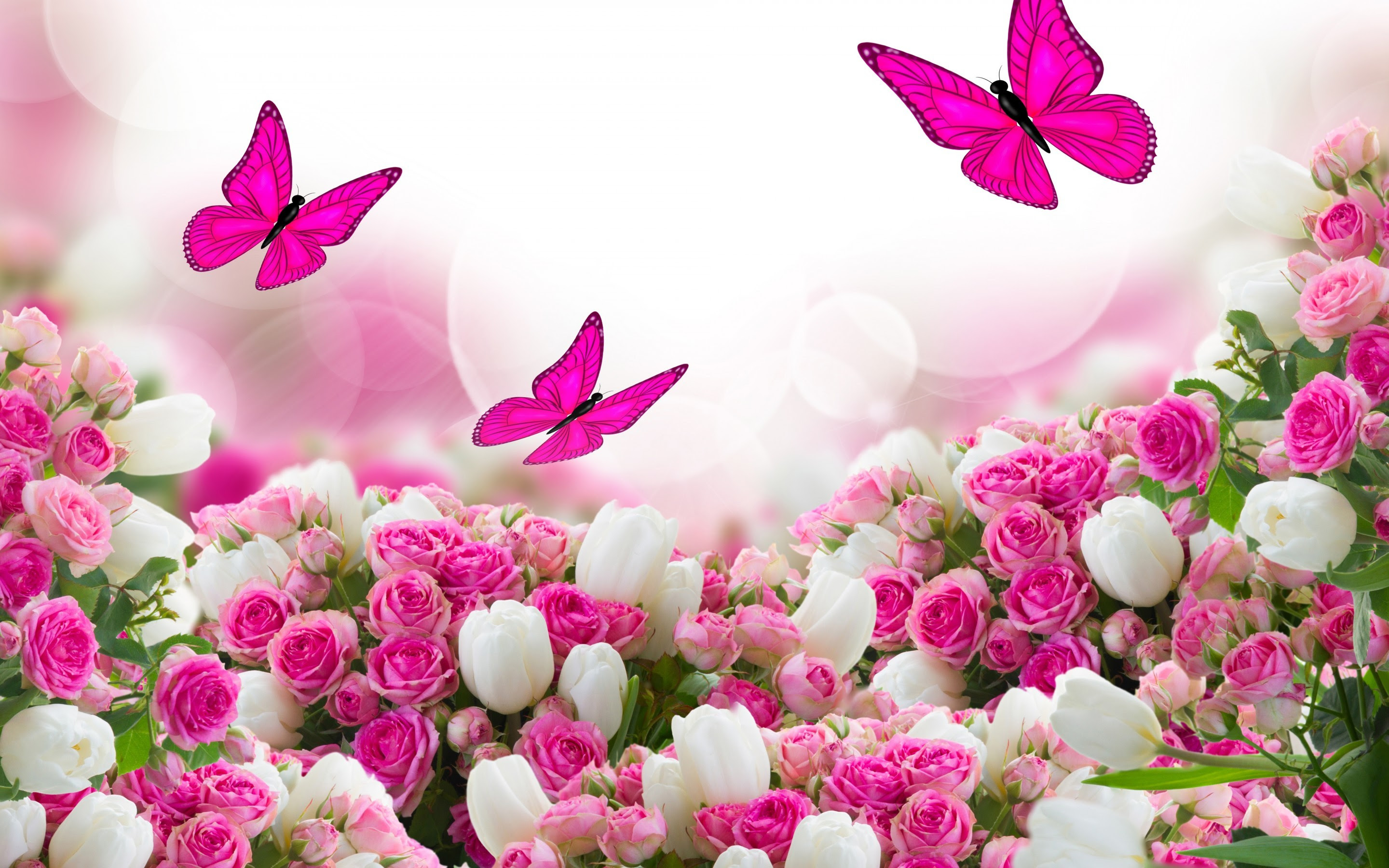 Wallpaper Full Hd Beautiful Flowers