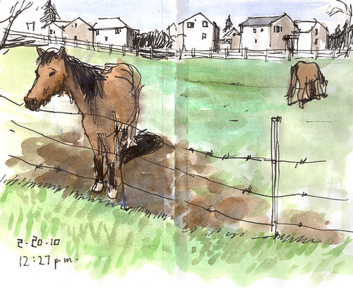 horse022010f