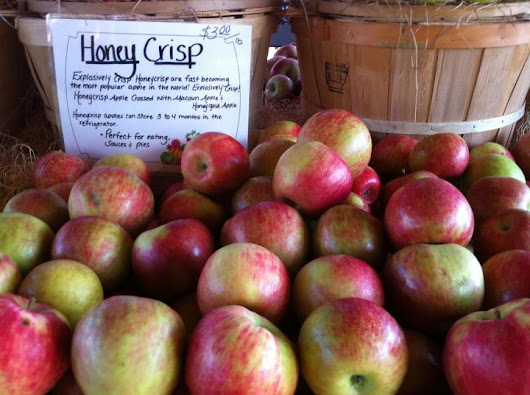 Fall Farm Fever in Milford. An apple a day… you know the rest!