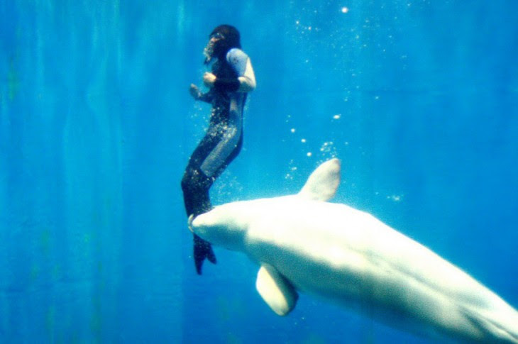 la beluga mia salva a buzo experimentado