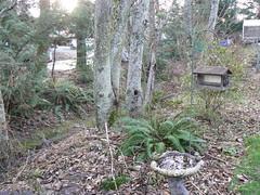 Winter view of my creekside woodland garden