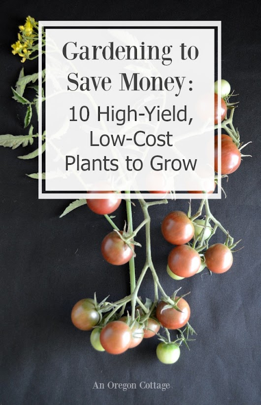 Gardening to Save Money: 10 High-Yield Low-Cost Plants to Grow