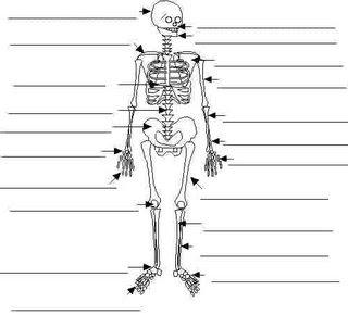 L 39 impalcatura di sostegno lo scheletro e adesso prova - Scheletro foglio da colorare ...