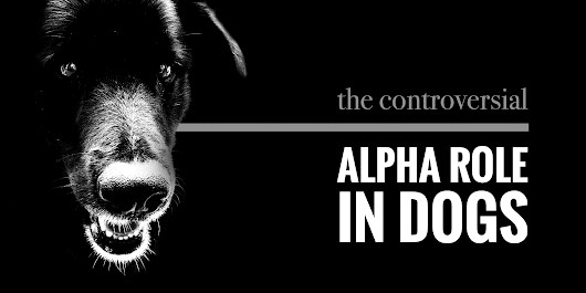 Controversial: What Does It Mean To Be Alpha?