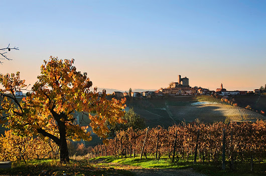 Best Barolo producers & Barbaresco producers - Decanter
