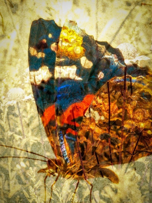 Butterfly Photo Collage 8 x 10 Print by LeslieDutcher on Etsy