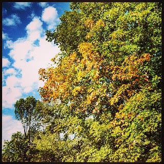 Why yes, #fall does come to my #yard first, of course! #love #trees #clouds #sky #leaves