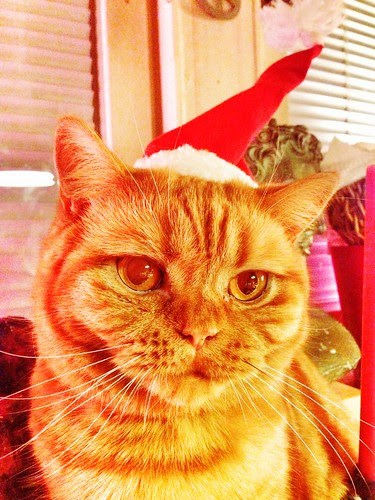 happy christmas cats