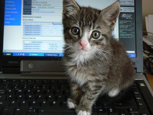 Capas para Facebook - Gatos