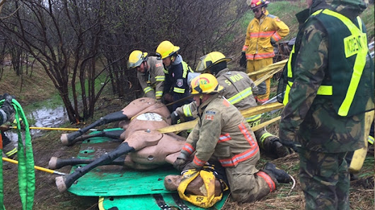 Fire crews train to rescue large animals during emergencies