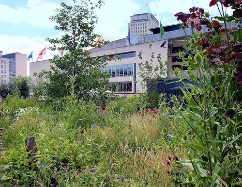 South Bank wild flower garden