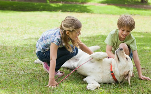 How to use dog training collar: Alpha Dog Technology