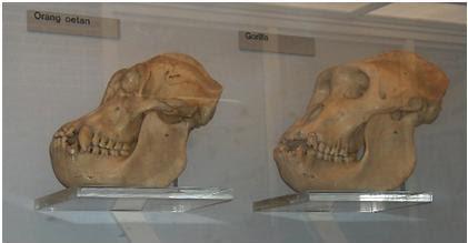 Cráneos.jpg