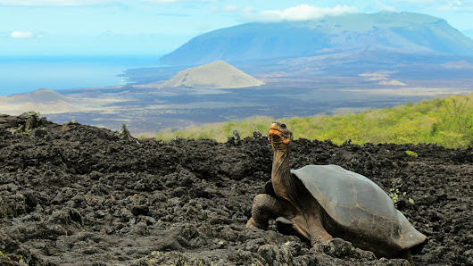 Resurrecting Lonesome George