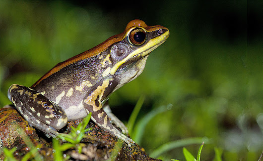 An odd discovery involving frog skin could end flu season forever