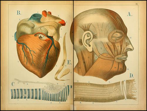 atlas anatomie enfant 01 Atlas anatomique pour écoliers en 1879  information histoire design