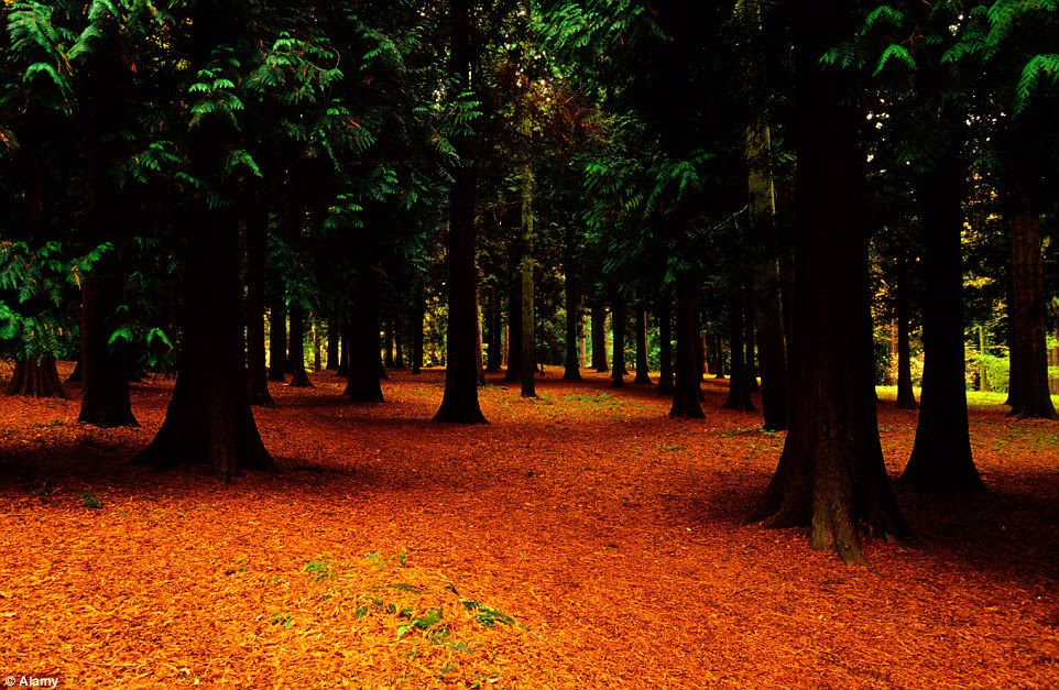 The pine trees of Great Windsor Park look beautiful in autumn and proved a perfect backdrop for the dark live action fairytale