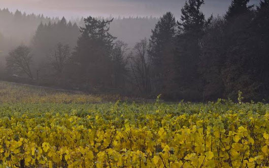 Dunne on Wine: Willamette Valley pinot noir comes of age