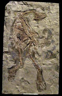 Caudipteryx zoui