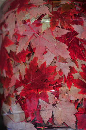 My Red Tree Leaves