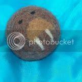 walrus ball