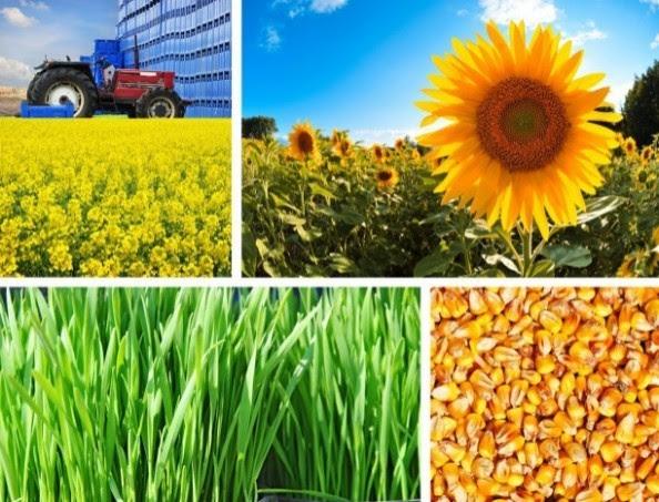 Resultado de imagen para agroindustria