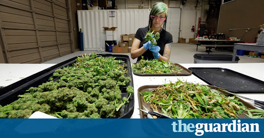 New medical marijuana research could greenlight more uses in treatment | Life and style | The Guardian