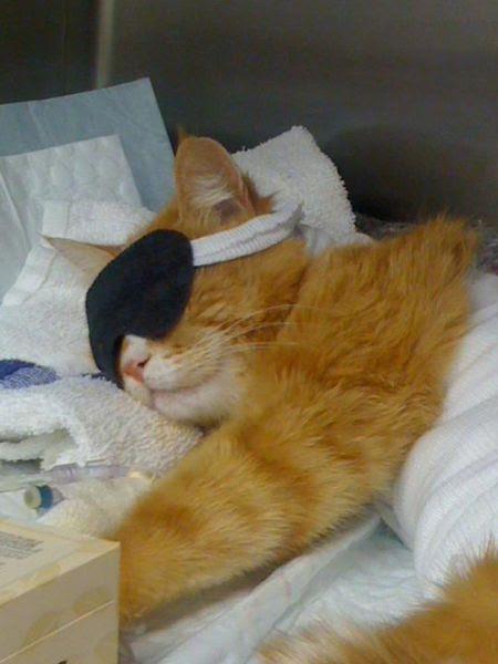 The Amazing Surviving Cat