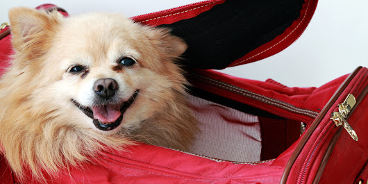 Real-World Advice For Travelling With Your Jet-Set Pet