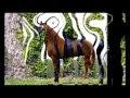caballos de raza bailadores