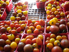 cherry tomatoes, Windmill Point Farm