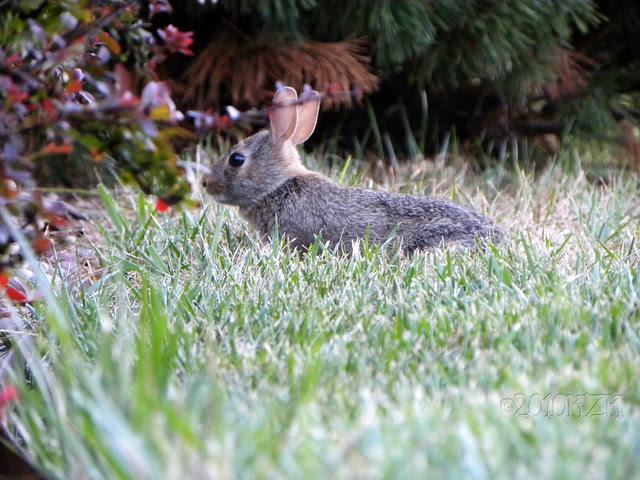 DSCN6671 Baby Bunny