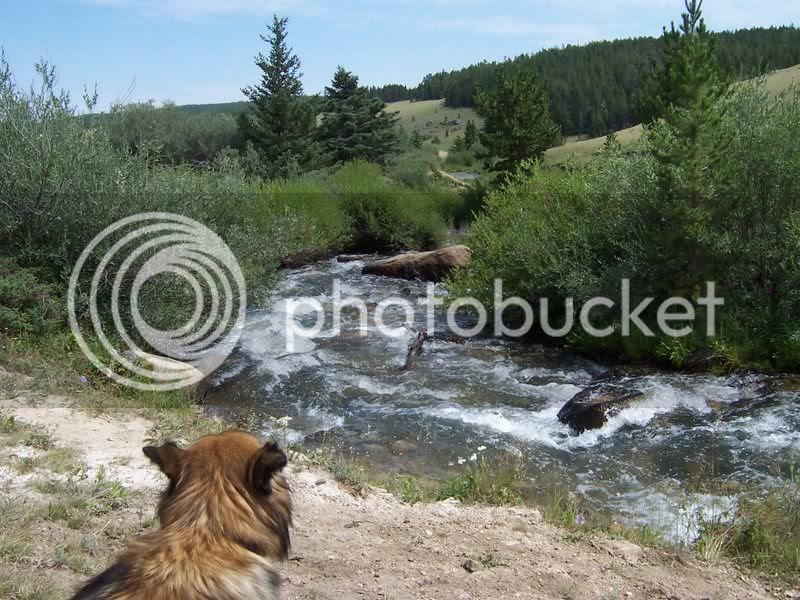 Josie Looks Upstream