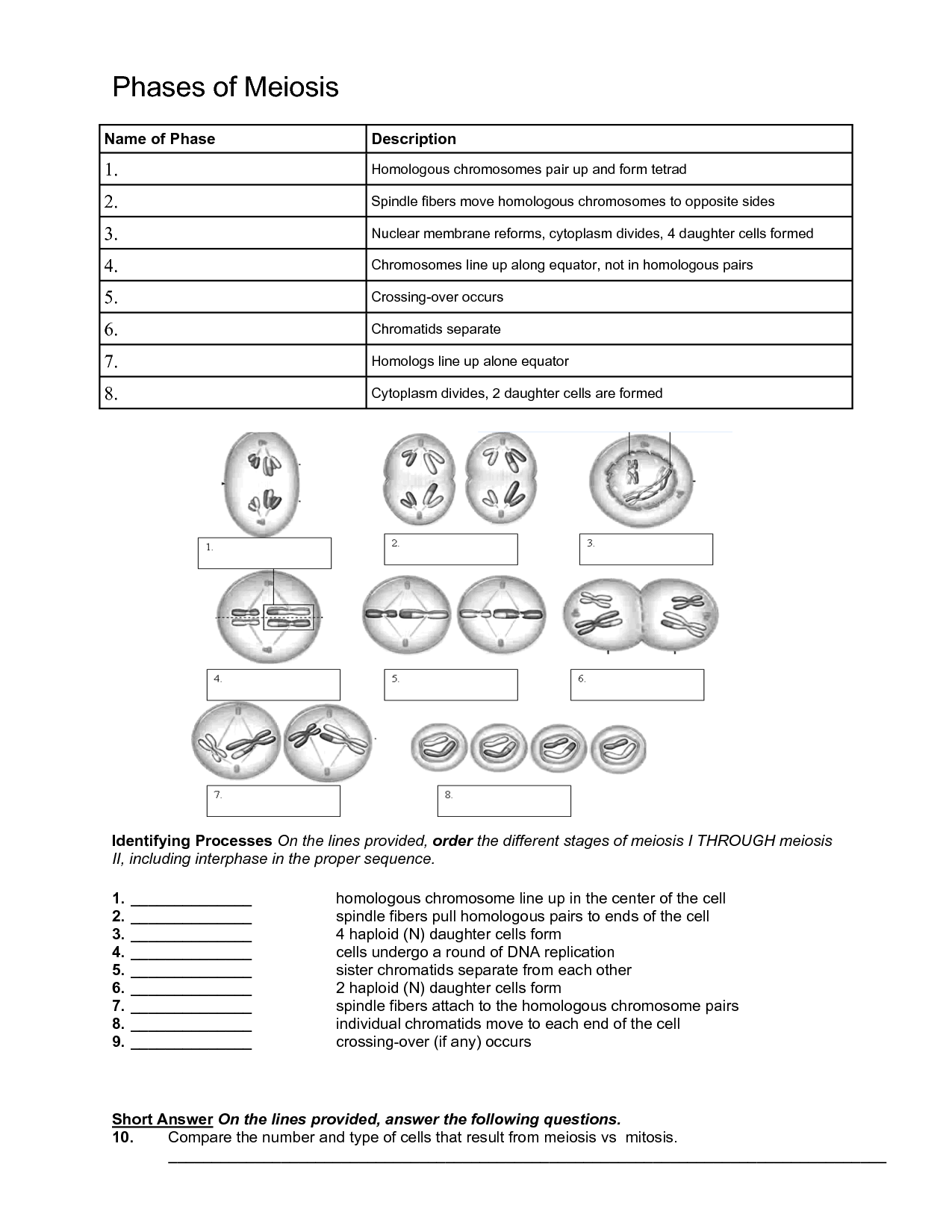 35 Comparing Mitosis And Meiosis Worksheet Answer Key
