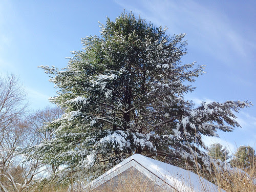 beautiful snowy tree by twigalinda