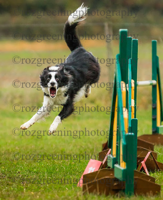 Just4Dogs Fun day November 2012 - Roz