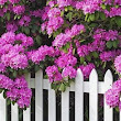 5 Great Flowering Shrubs - Walpole Outdoors