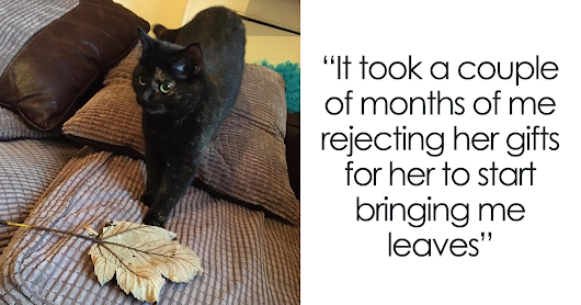 Cat Figures Out Owner Does Not Enjoy Her Live Gifts, Starts Bringing Giant Leaves Every Morning