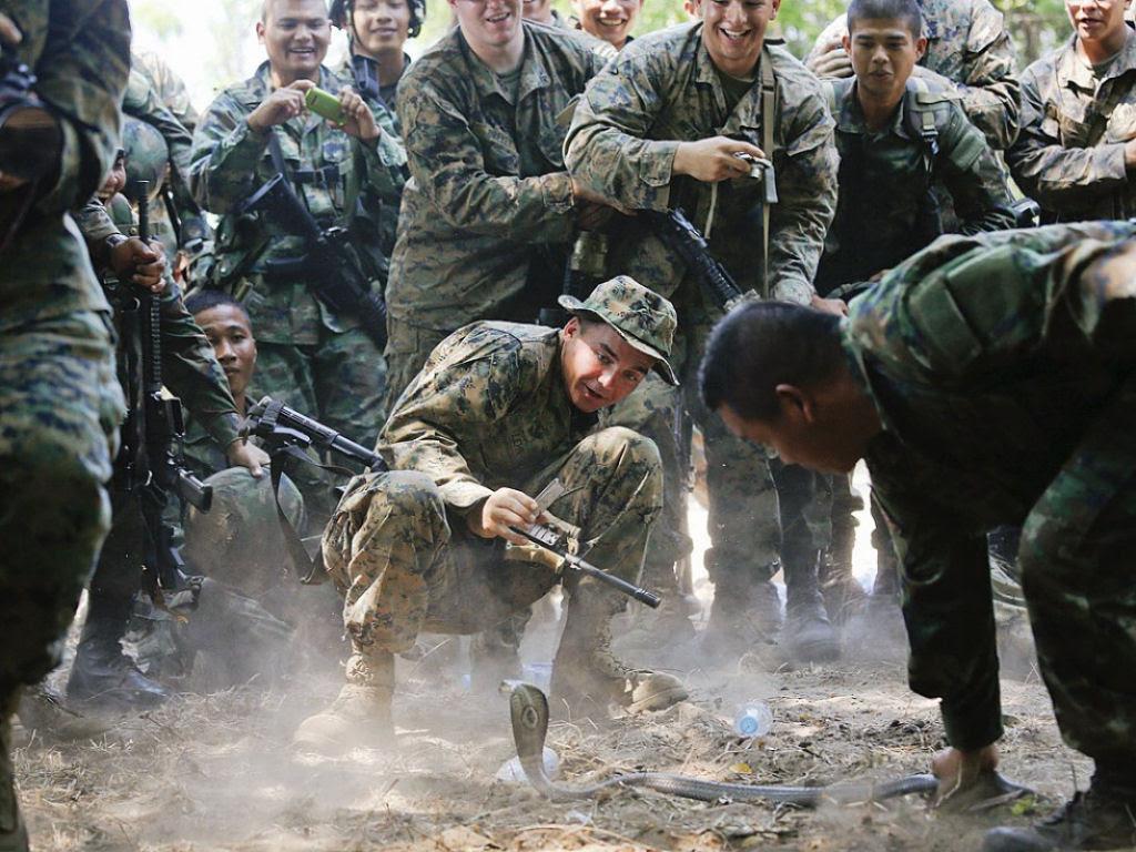 Cobra Gold 2013 - Militares sobrevivem com sangue de cobra na selva tailandesa 10