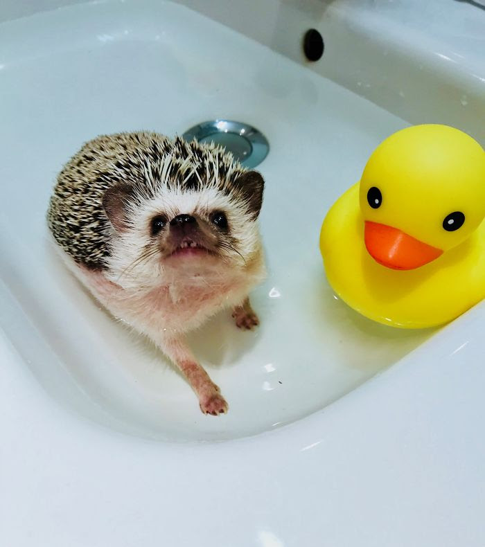 L'heure du bain!