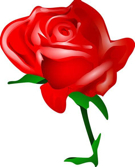 ynk desain  tutorial membuat gambar  bunga mawar