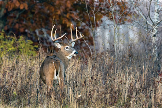Why Patterning and Killing Mature Bucks is Whitetail Hunting's Ultimate Challenge - Petersen's Bowhunting