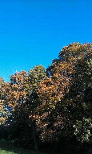 Autumn by Wurzel
