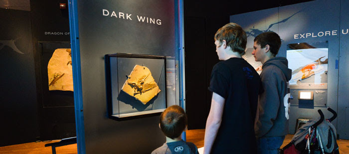Visitors with Dark Wing Fossil 700.309