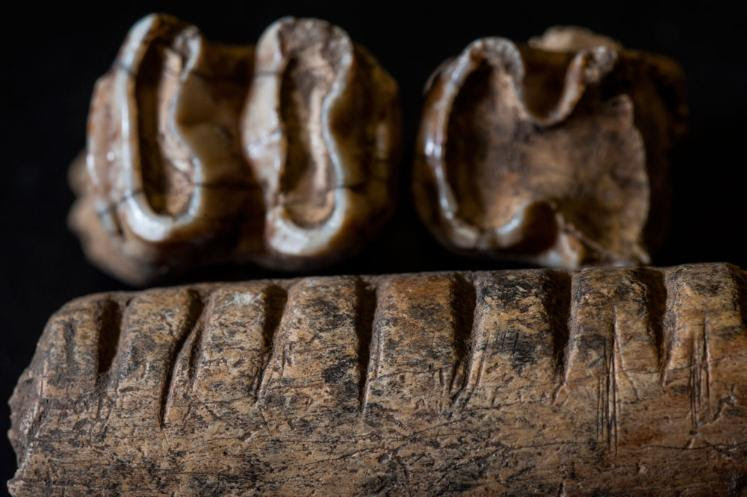 ancient teeth from a Maya site
