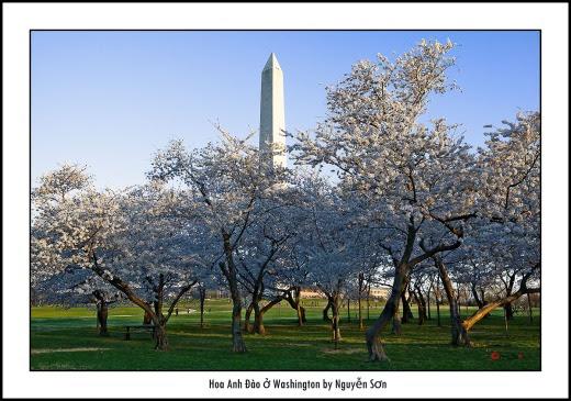 006 Mùa Xuân Washington