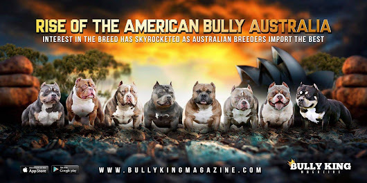 About Us | BULLY KING MAGAZINE